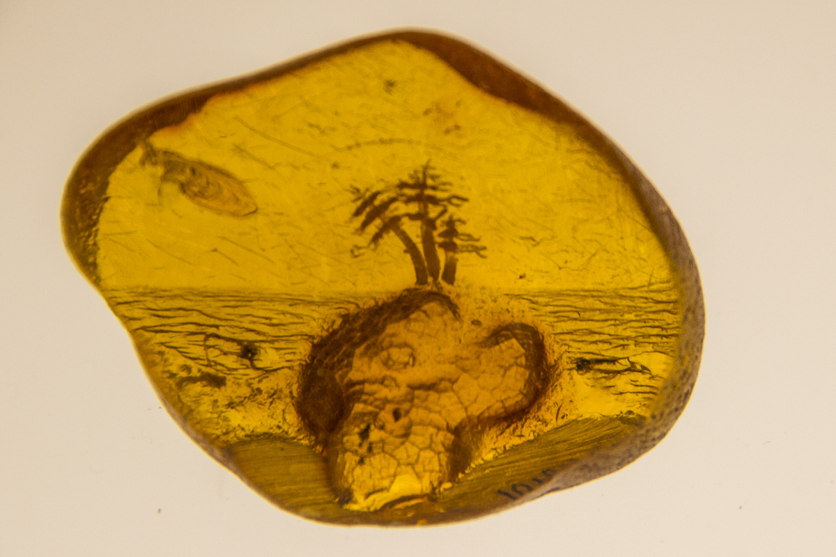 Amber containing fossils at the Amber Museum in Palaga, Lithuania 0182